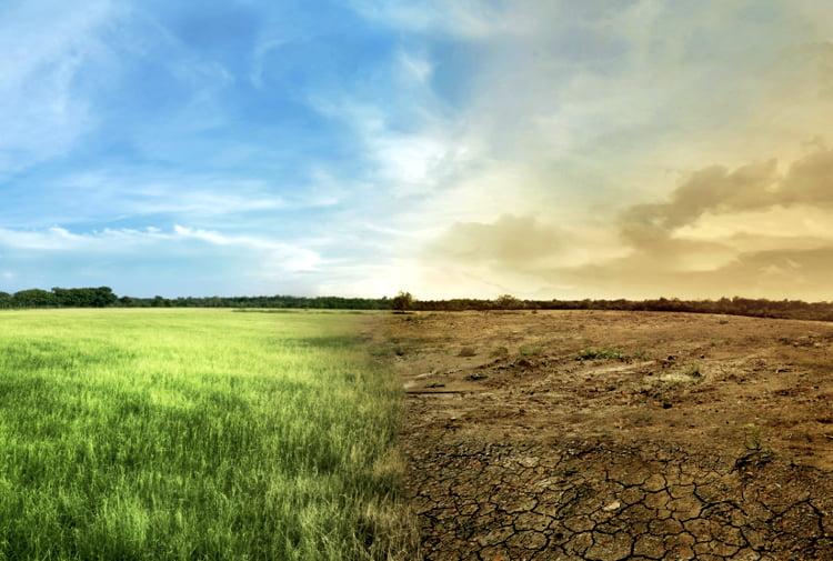 Küresel Gıda ve İklim Krizlerine bir Cevap Olarak Agroekoloji / Doina Popusoi