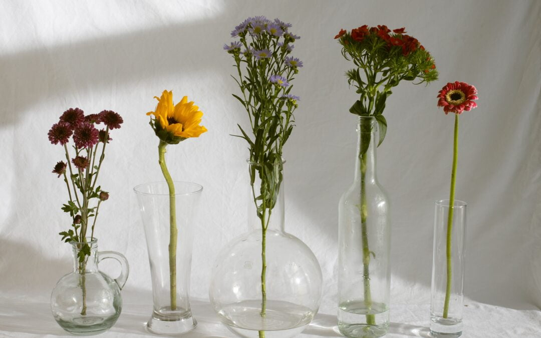 Doğal Bir Ev Ortamı Yaratmak İçin Bitkilerden Faydalanın!