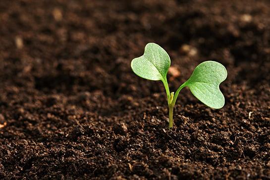 Kent Bahçeleri Tohumlarının Dağıtımı – 19 Eylül
